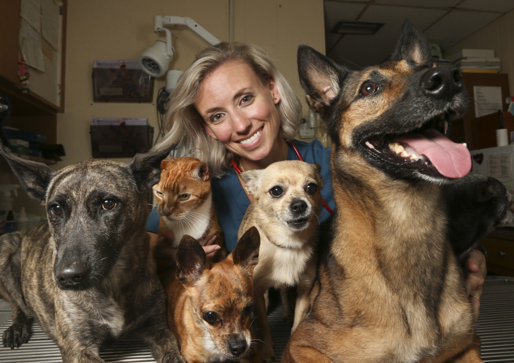 """""""I really wanted to be a Vet since I was five,"""" Joci Forkner said. """"I've always loved animals and I really like science."""" Joci Forkner, DVM, pictured with a handful of her eight pets in the treatment room at the Animal Hospital of Treasure Island, 155 108th Ave, on Tuesday, July 30, 2019 in Treasure Island. Joci has been a veterinarian since 2011 and is the co-ower of the Animal Hospital of Treasure Island. From left is Bindi, Brady (cat), Shrimp, Scampi, and Gillie. Joci says her favorite part about treating pets are when you finally turn a corner and you know that they are feeling better. """"Building relationships with the patients and the owners,"""" Joci says is also one of her favorite things. """"It can be very rewarding."""" DIRK SHADD   